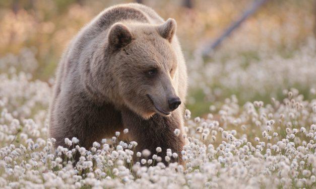 Top 5 bijzondere Arctische belevenissen